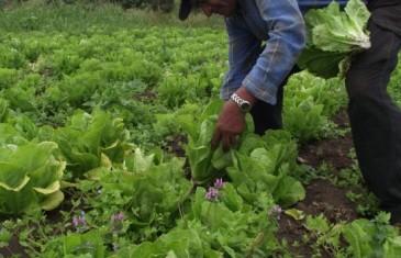 Anuncian proyecto que crea nuevo Ministerio de Agricultura