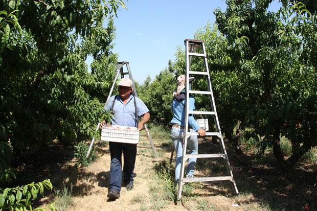 Desesperada situación viven socios de ABR Frut por millonaria deuda en Romeral