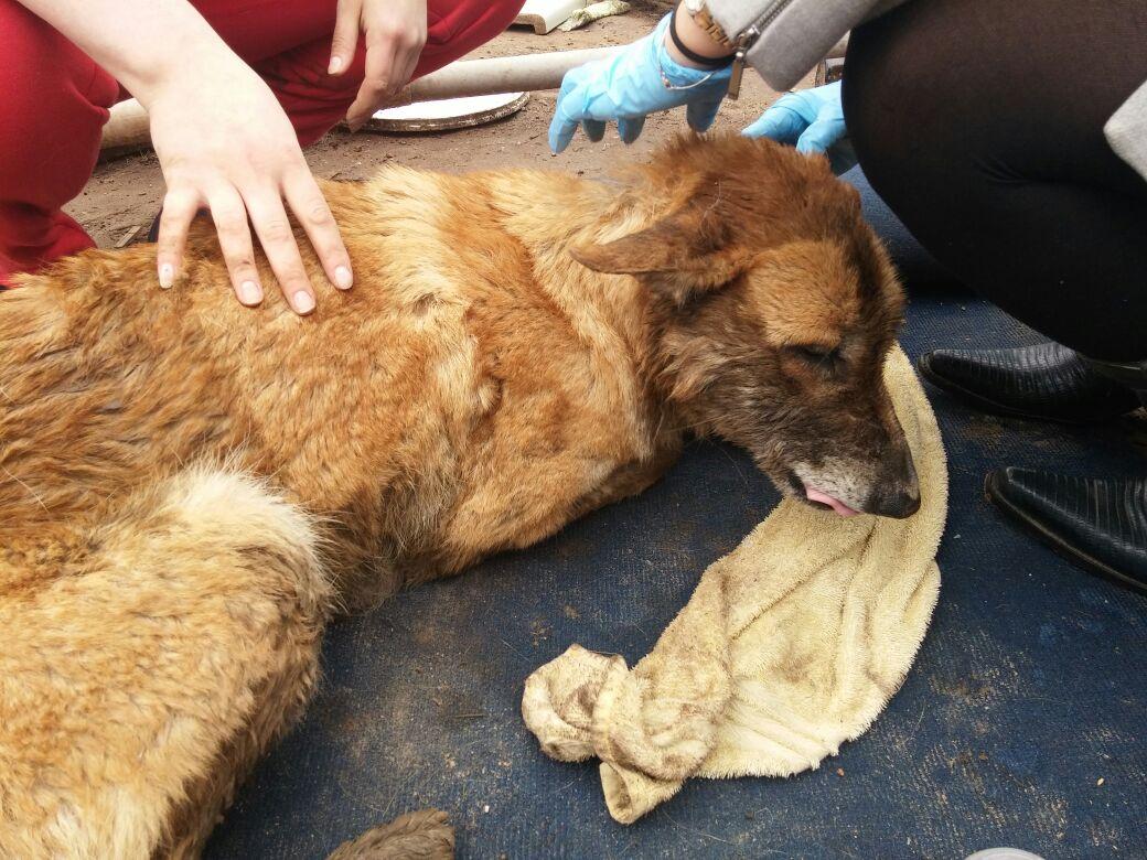 Detienen a un individuo por maltrato animal