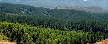 Gobierno anuncia proyecto que crea el Servicio Nacional Forestal