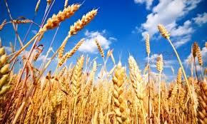 Agricultores podrán ser beneficiarios de Cotrisa