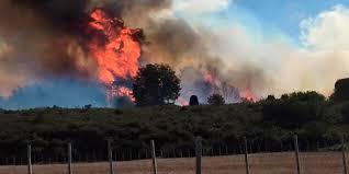 CORE inyecta recursos para proyecto de prevención de incendios forestales en el Maule