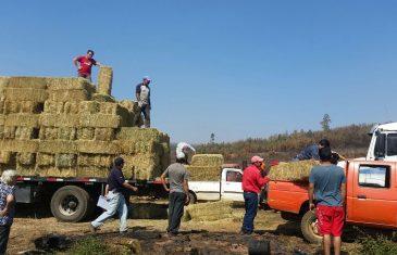 16 Mil fardos entregados a agricultores afectados por incendios en el Maule