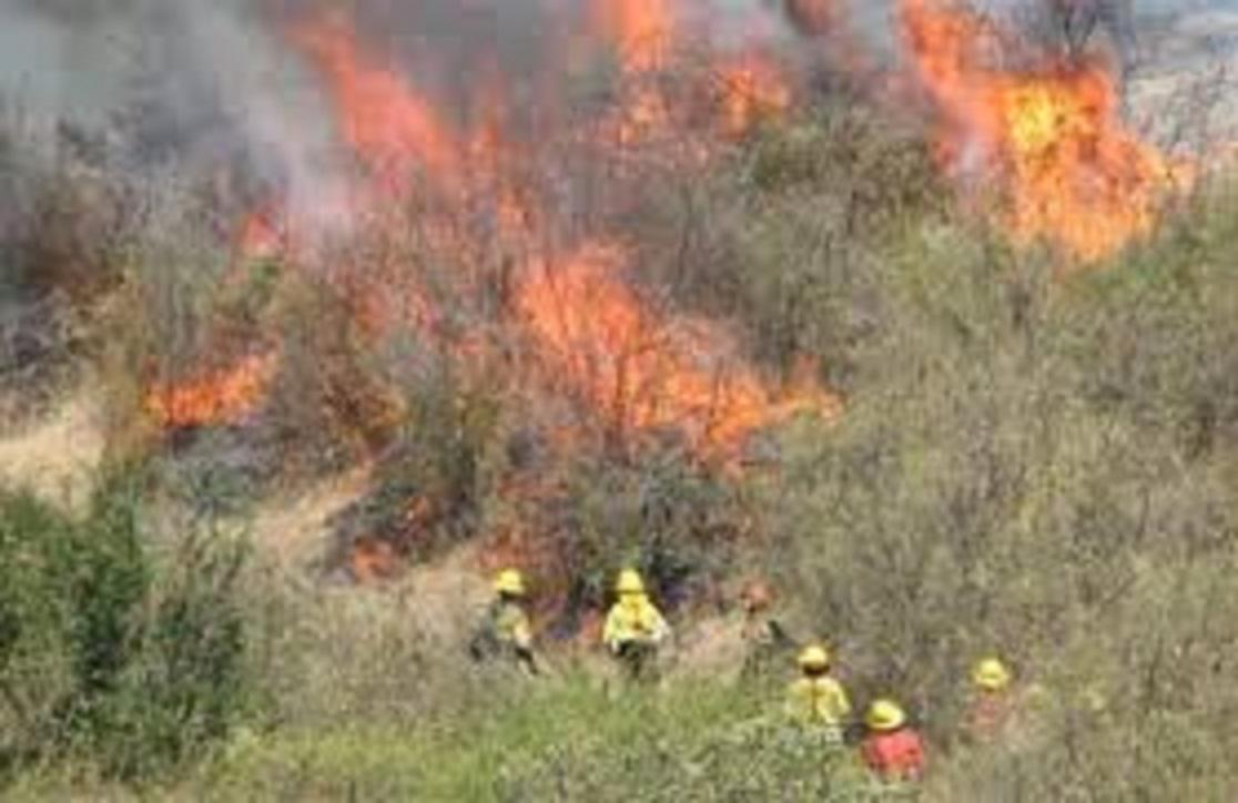 Ministerio Público: 216 causas en el Maule son por incendios forestales