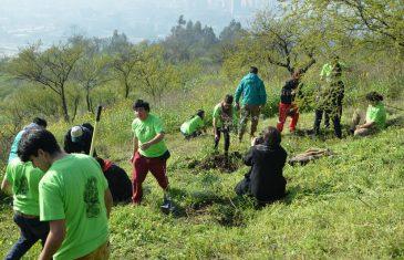 Conaf e Injuv hace un llamado a postular a proyecto de arborización