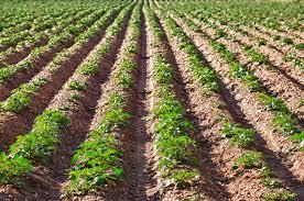51% de los agricultores cree que esta temporada será mucho mejor que la anterior