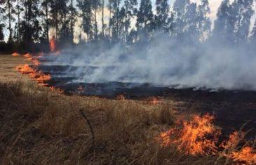 Conaf y empresas forestales preparan acciones ante posibles incendios