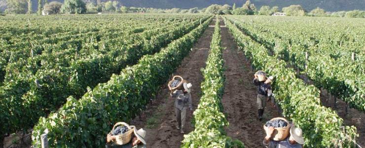 Minsal dio el vamos a la campaña de trabajo agrícola en el Maule
