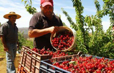 SAG define lineamientos para exportación en el Maule