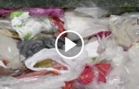Gobierno busca terminar con bombillas plásticas en el comercio con el objeto de resguardar el medio ambiente.