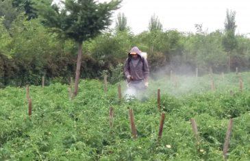 Estudio de la UTalca detectó malas prácticas en manejo de plaguicidas