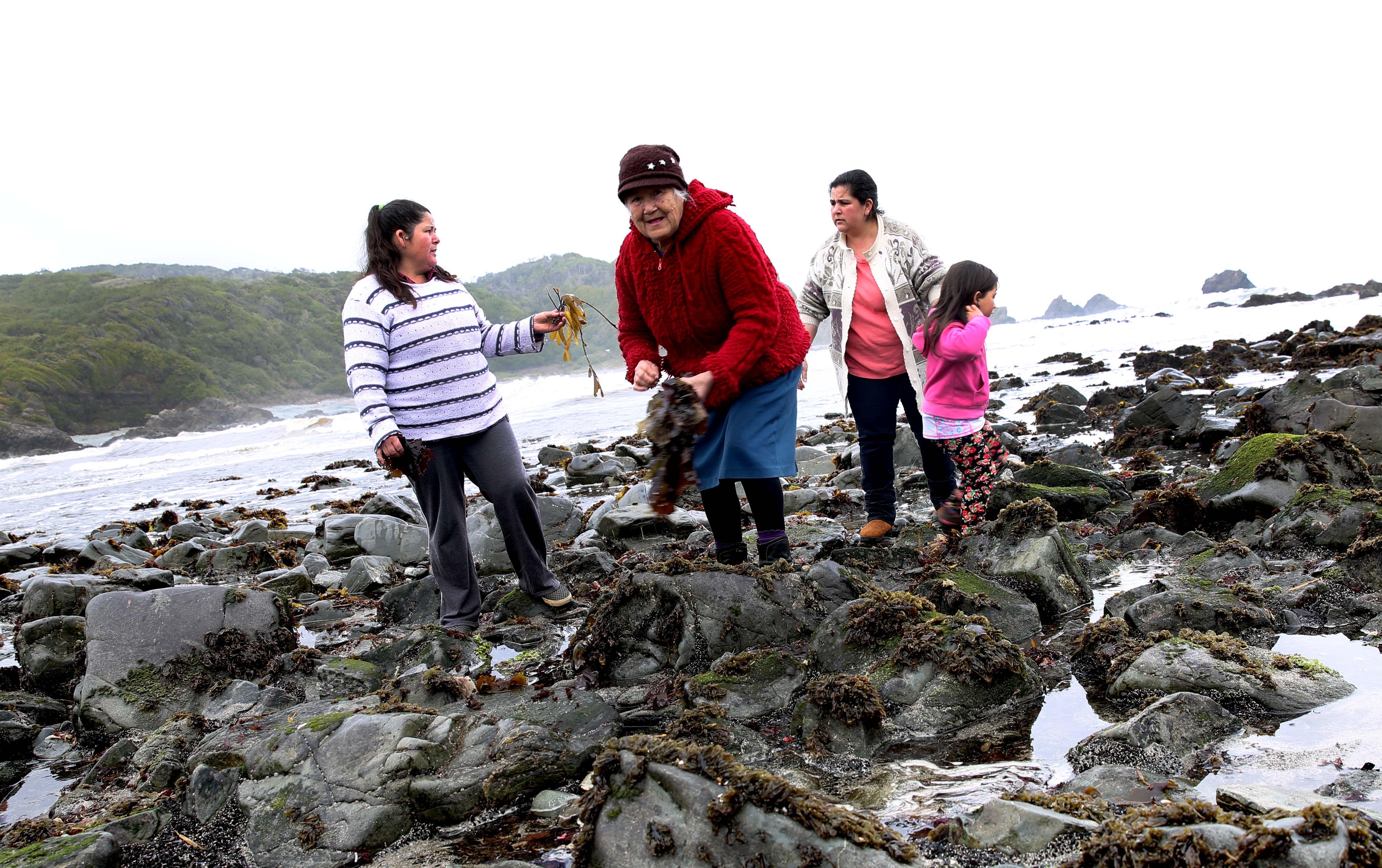 Kit indumentaria profesional para mujeres recolectoras de orilla