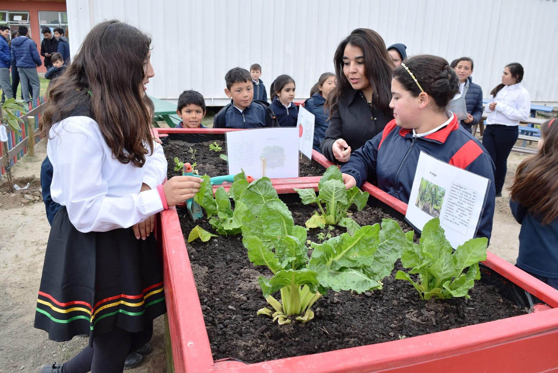 Colegios del Maule podrán implementar huertos