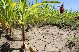 """Campaña """"Chile se está secando"""" busca tener uso eficiente del agua"""