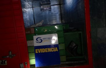 Sernapesca incautó camiones con merluza común ilegal