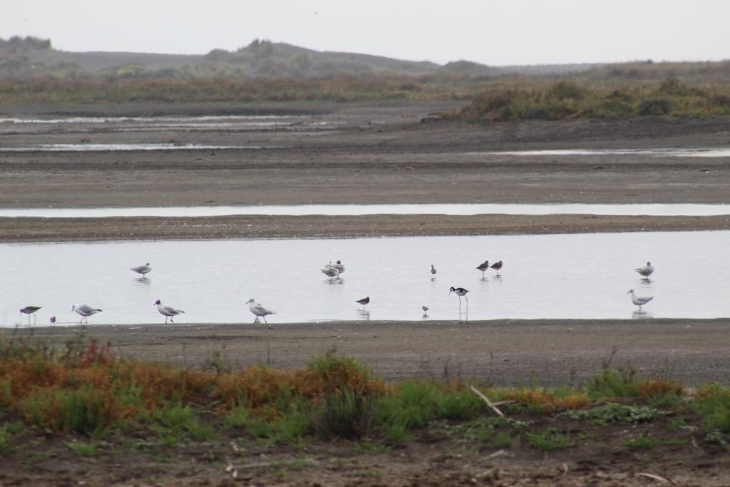 SAG Maule culminó censo de aves acuáticas en humedales de la región