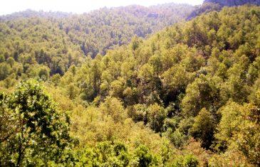 CONAF amplió plazo para postulaciones a concursos del fondo de la ley del bosque nativo