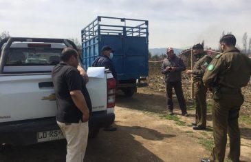 Más de 40 kilos de carne faenada clandestinamente fue decomisada en Longaví