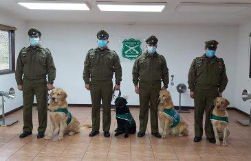 Brigada de perros detectores de Covid-19 podrán inspeccionar 1.000 personas en una hora