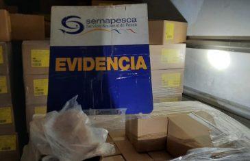 Trabajo de inteligencia de Sernapesca arrojó incautación  de 11 mil 300 kilos de merluza común ilegal