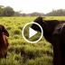 Autoridades de Agricultura encabezadas por el ministro Antonio Walker, efectuaron fiscalización a ganado bovino en Linares, el cual será exportado a China